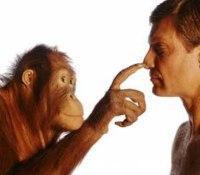 Уроки умелых обезьян