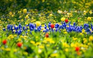 Весна (СИ)