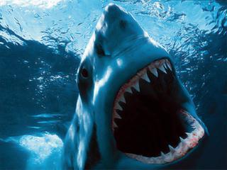 Возмездие акул