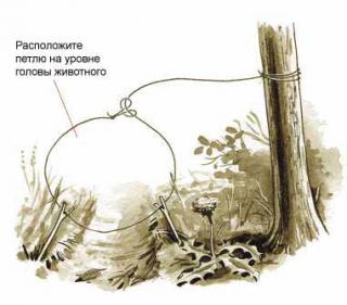 Выживание. Капканы из подручных материалов в лесу [Схемы описания, принцип действия]