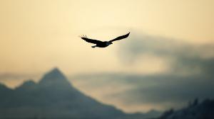 Я - птица (СИ)