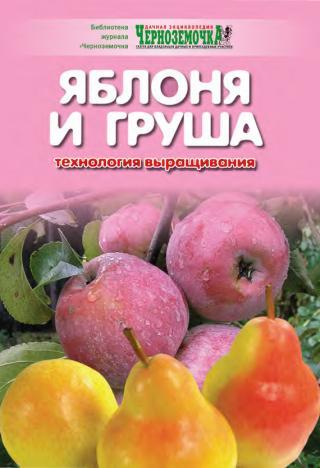 Яблоня и груша. Технология выращивания