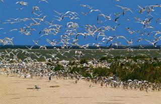 Загадочный и удивительный залив Сиваш