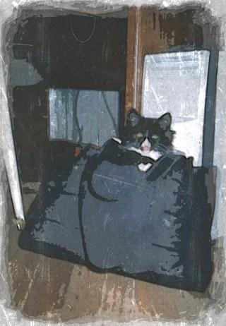 Записки кота Криса [жизнеописание одного питерского кота]