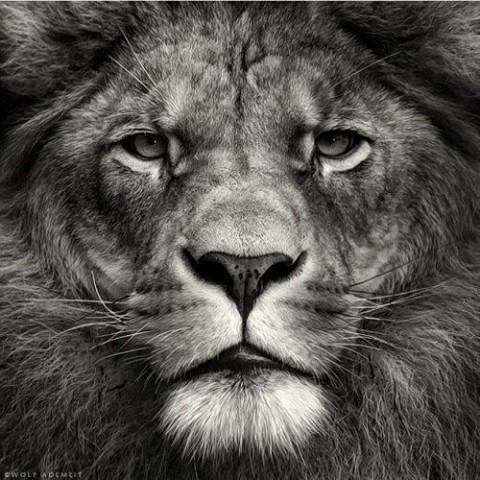 LionBY